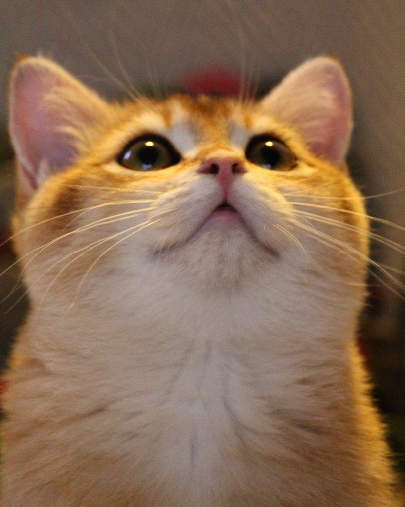 catmom leukste katten namen theodore cat