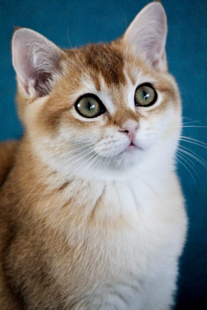 theodore cat catmom.nl