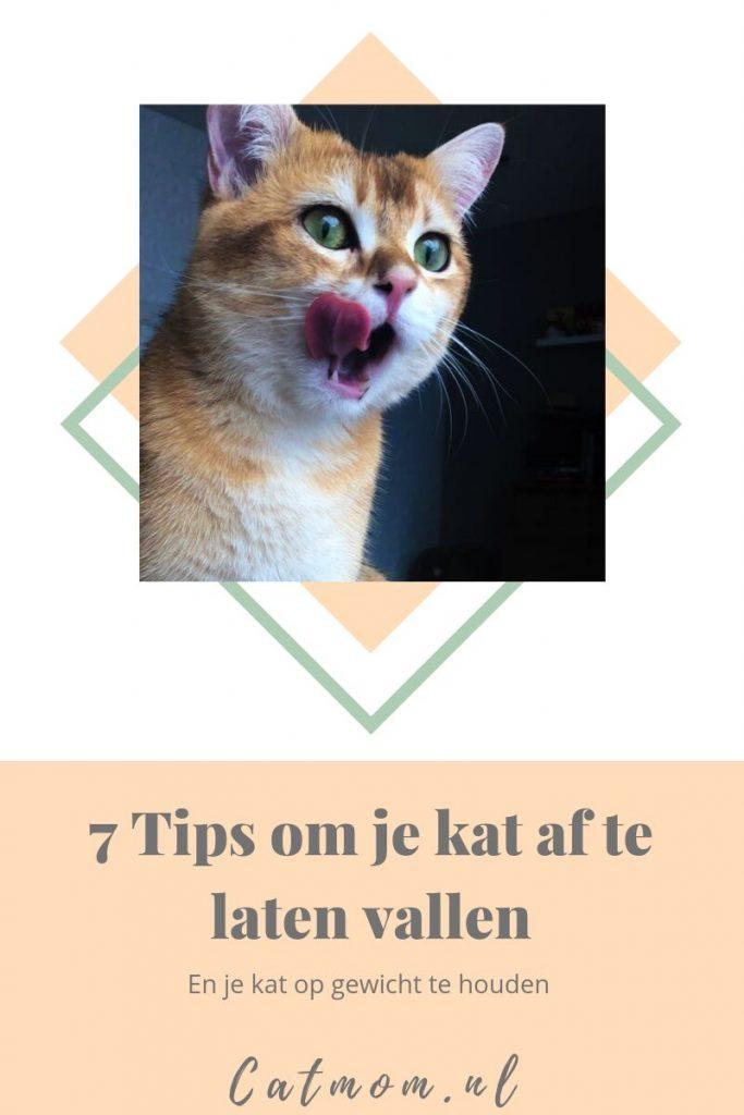 7 tips om je kat af te laten vallen en op gewicht te houden catmom.nl