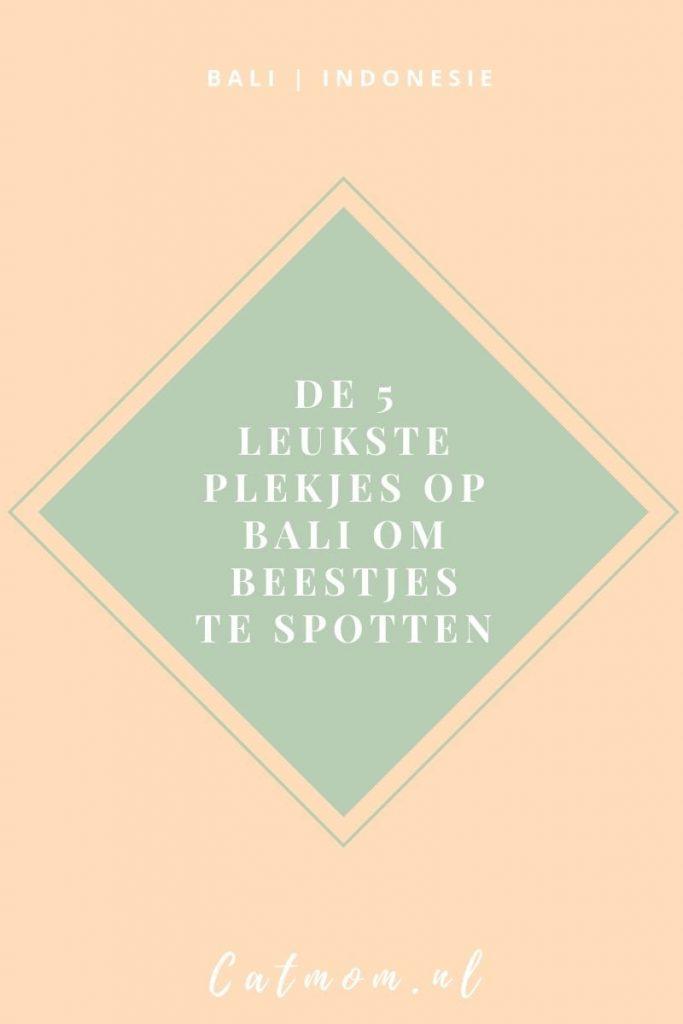 de 5 leukste plekjes op bali om beestjes te spotten catmom.nl