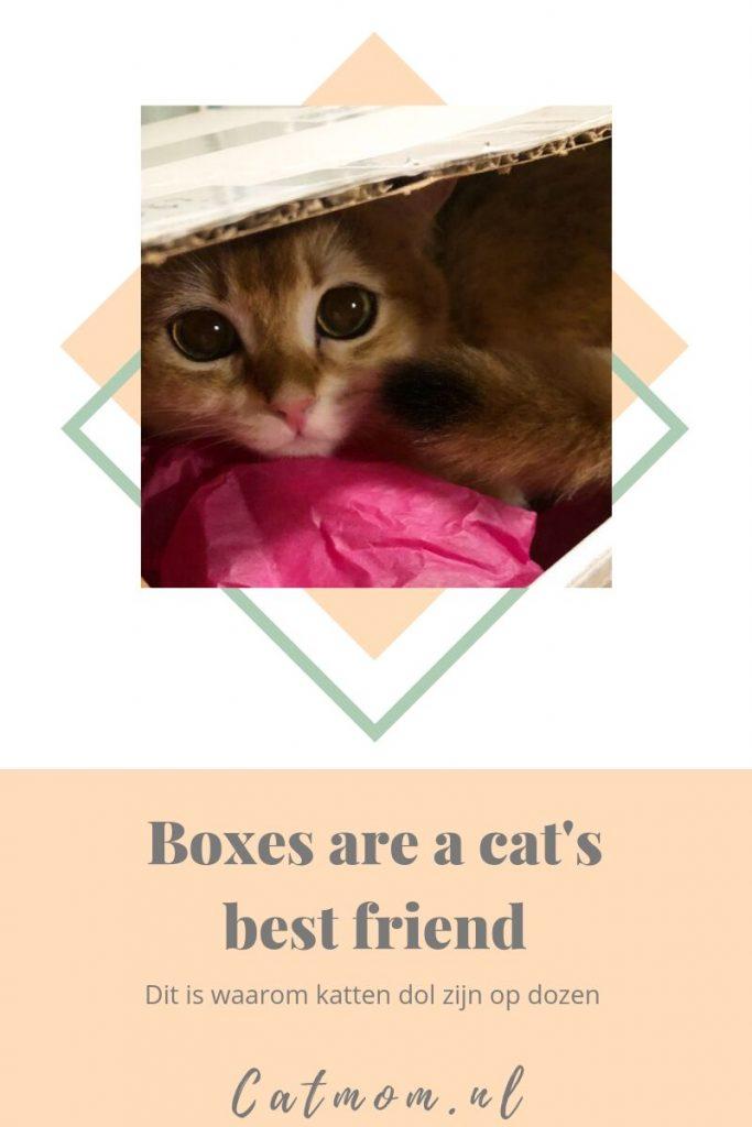 catmom.nl katten zijn dol op dozen