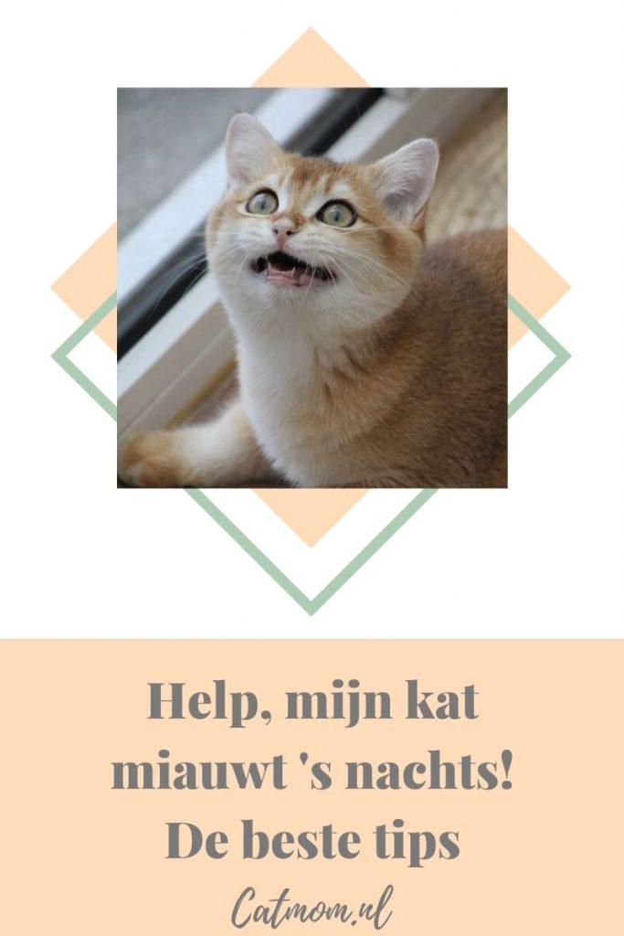 help mijn kat miauwt snachts catmom.nl