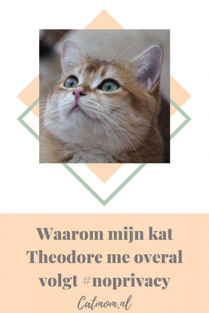 Waarom mijn kat Theodore me overal volgt, catmom.nl