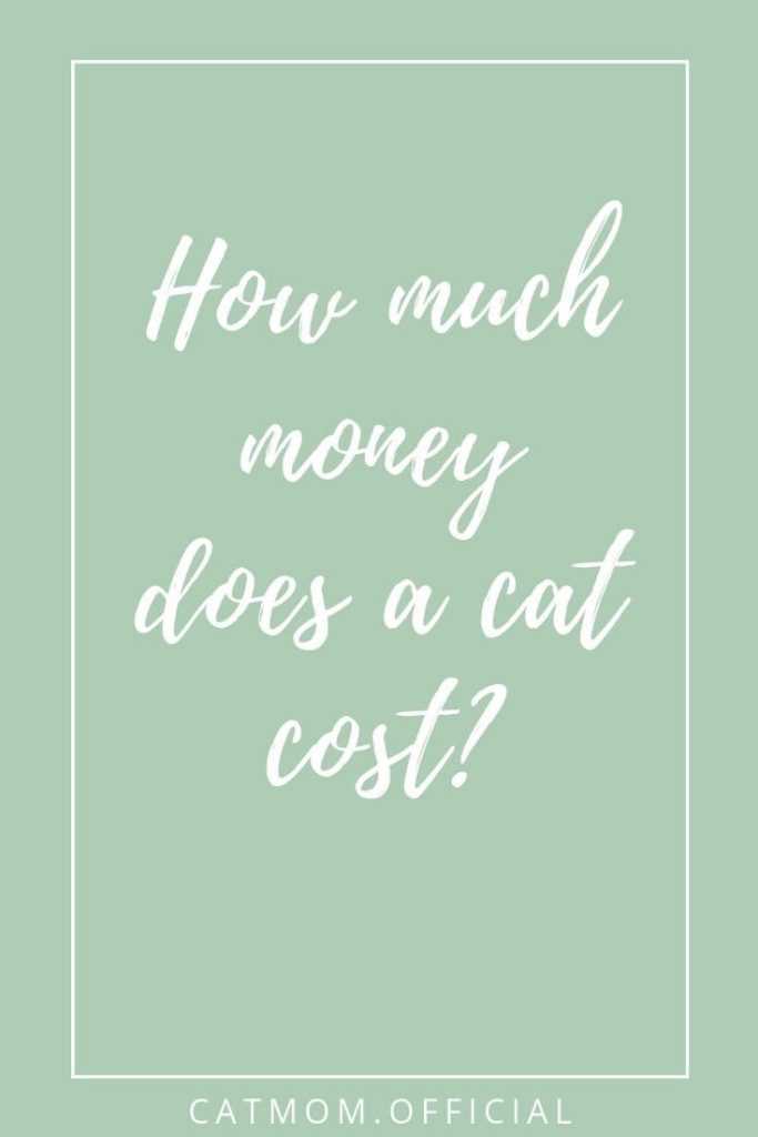 how much money does a cat cost catmom official
