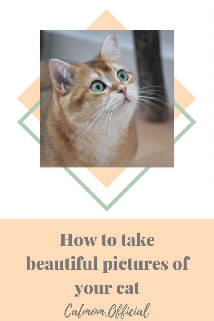 How to take beautiful pictures of your cat