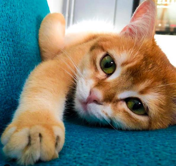 theodore__cat catmom.nl catmom de leukste instagram katten om te volgen instafamous cat