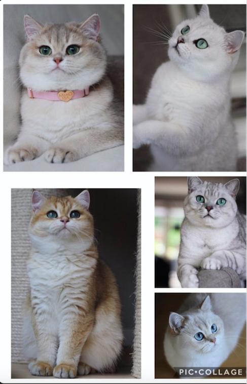 mistermachomissy de leukste katten om te volgen op instagram catmom