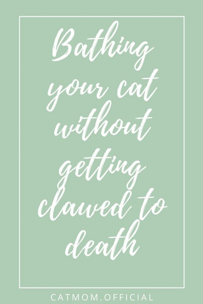 Bathing your cat without getting clawed to death