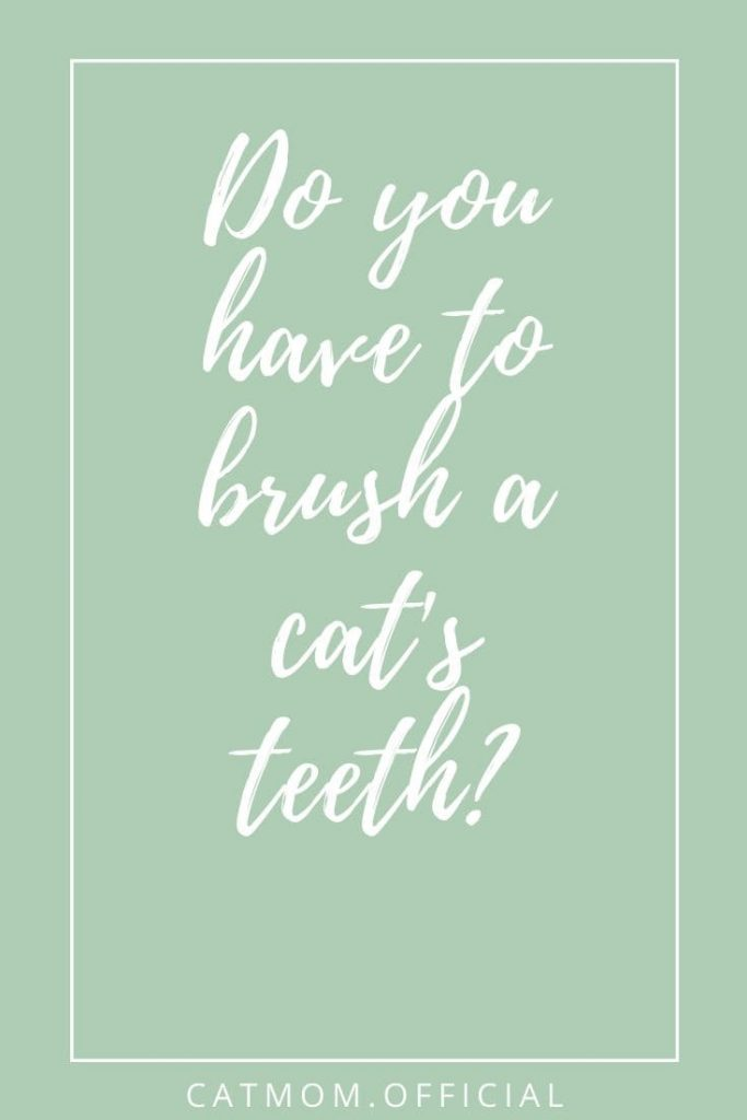 Do you have to brush a cat's teeth?