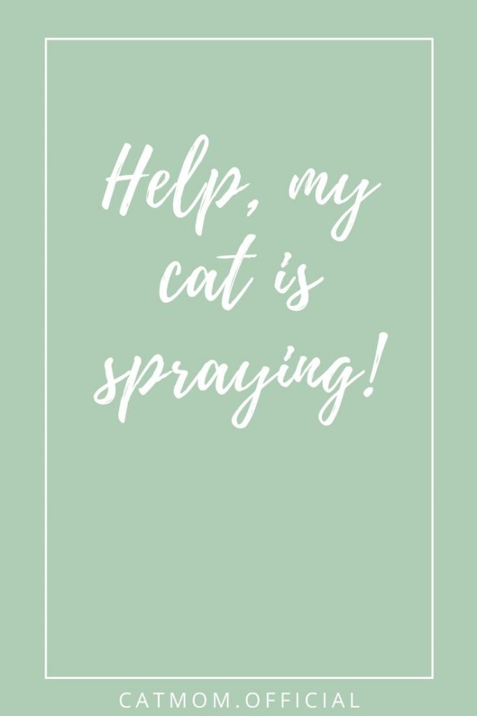 Help, my cat is spraying! Catmom official