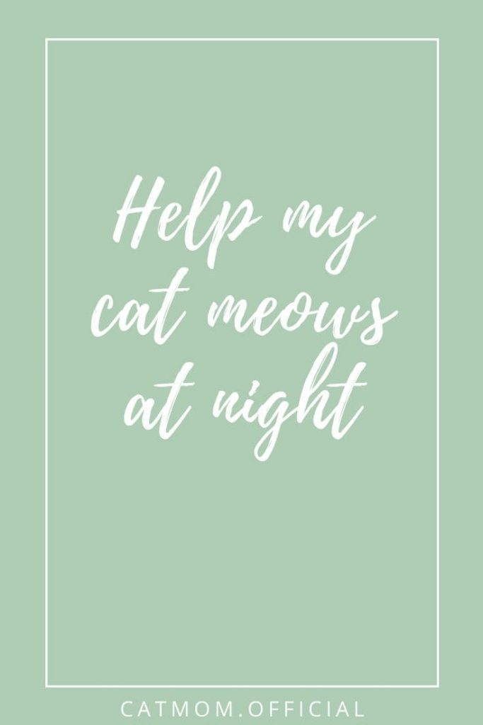 Help my cat meows at night catmom official the best tips to stop your cat from making noise at night