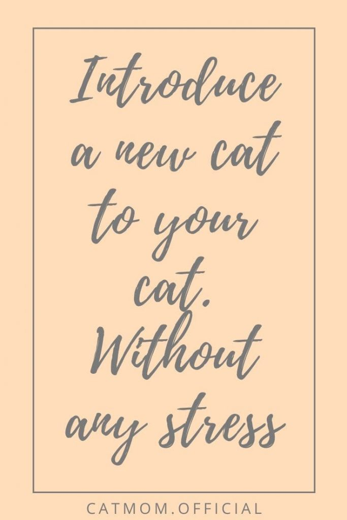 Introduce a new cat to your cat. Without any stress