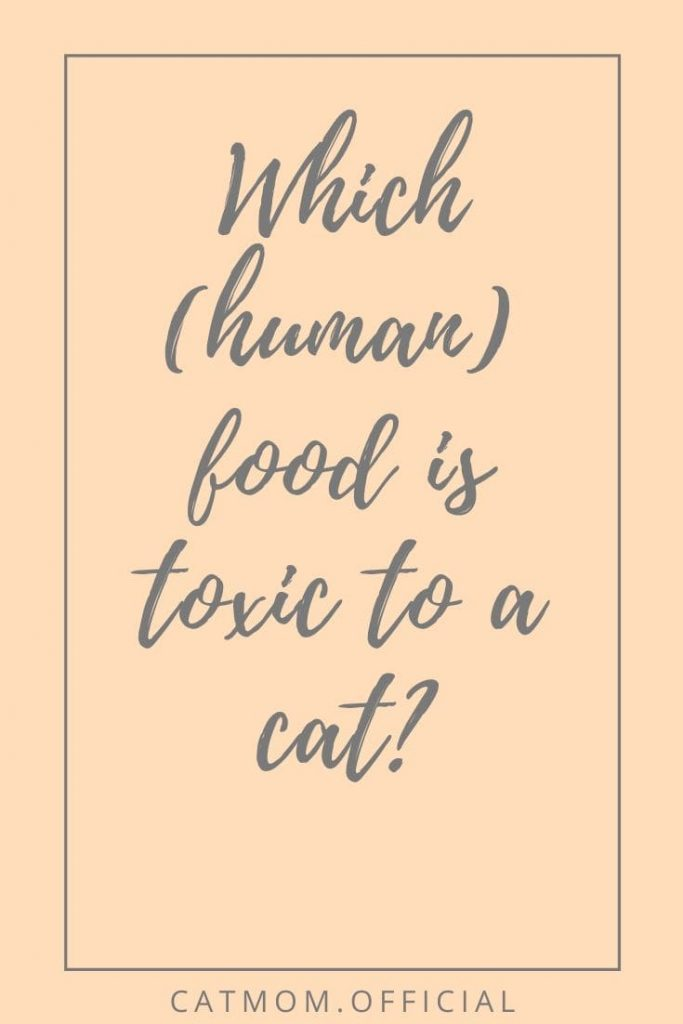 Which (human) food is toxic to a cat catmom official