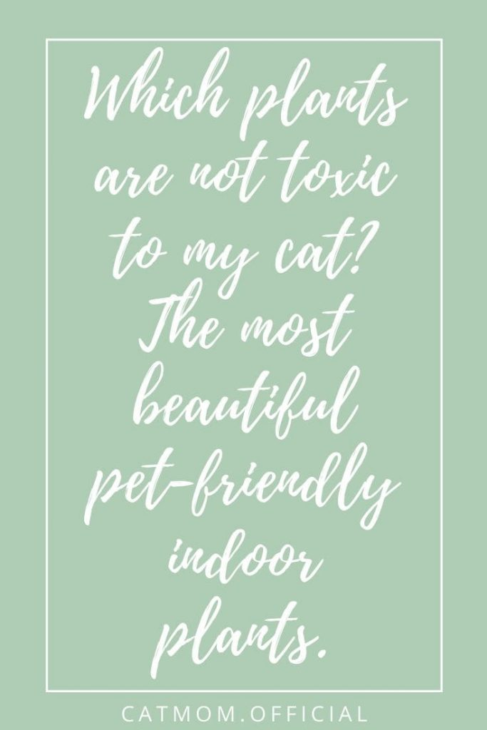 Which plants are not toxic to my cat The most beautiful pet-friendly indoor plants.