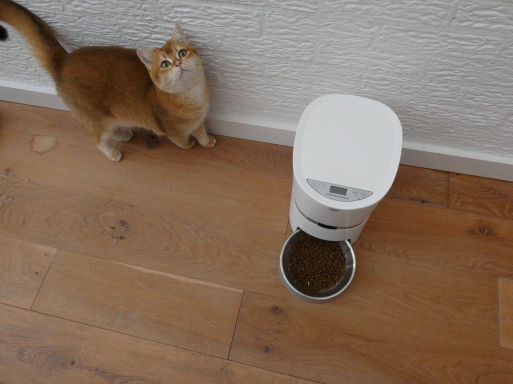 catmom.nl theodore cat honeyguardian pet feeder catmom