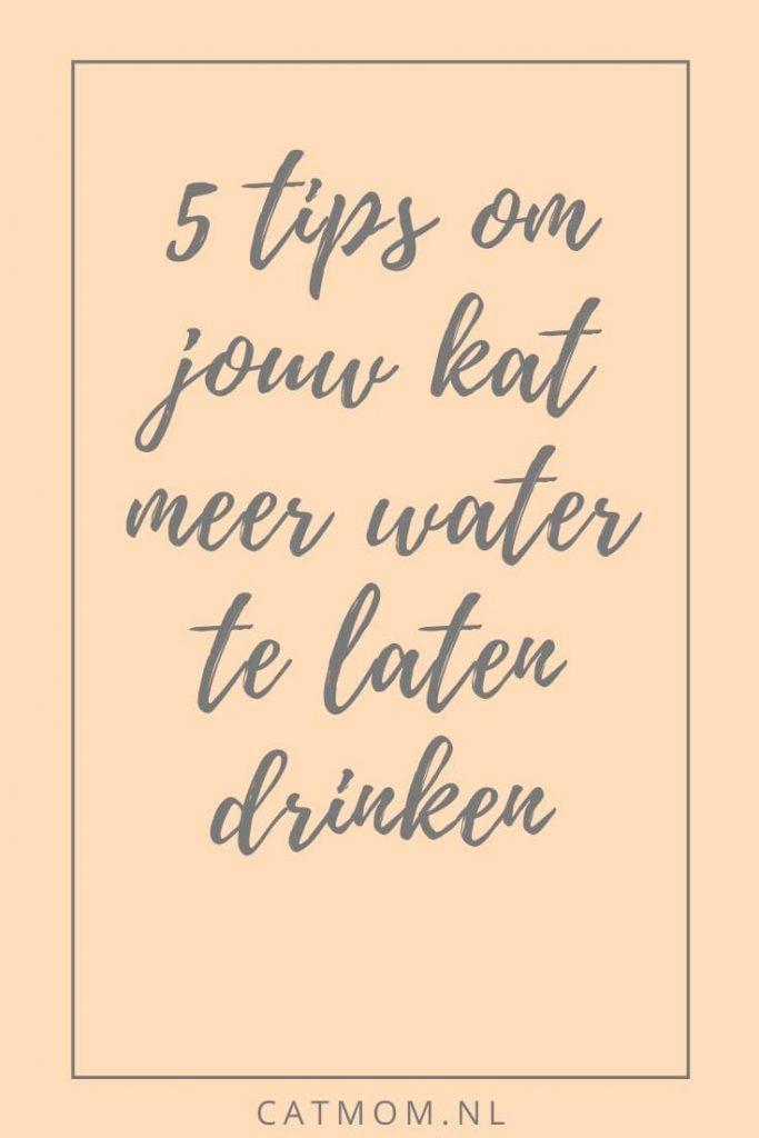 5 tips om jouw kat meer water te laten drinken catmom.nl