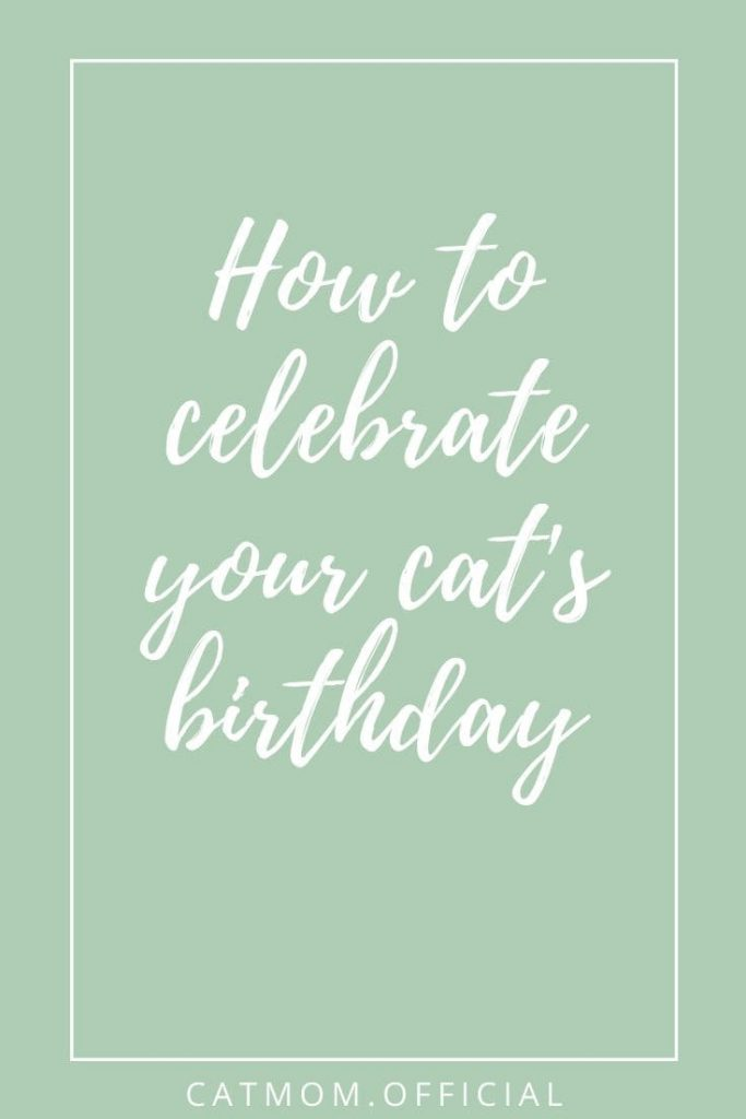 How to celebrate your cat's birthday