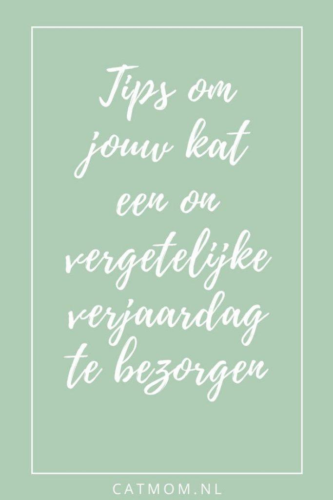Tips om jouw kat een on vergetelijke verjaardag te bezorgen catmom.nl