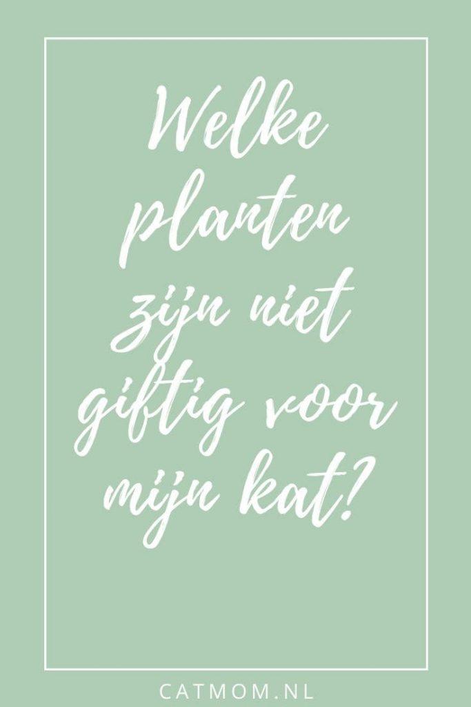 Welke planten zijn niet giftig voor mijn kat? catmom.nl