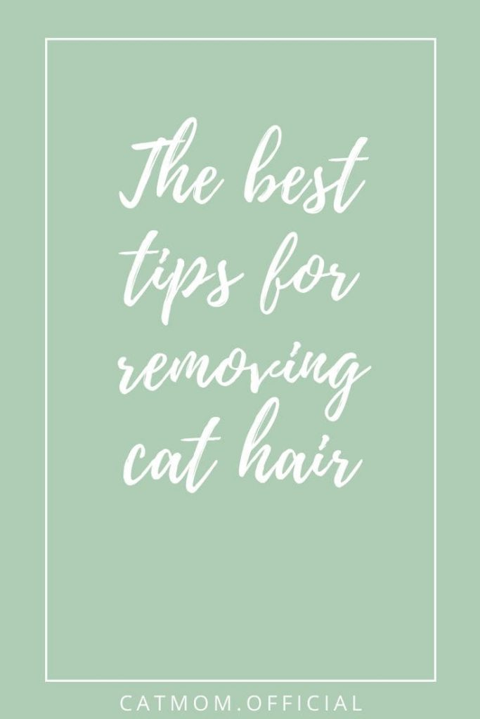 The best tips for removing cat hair catmom