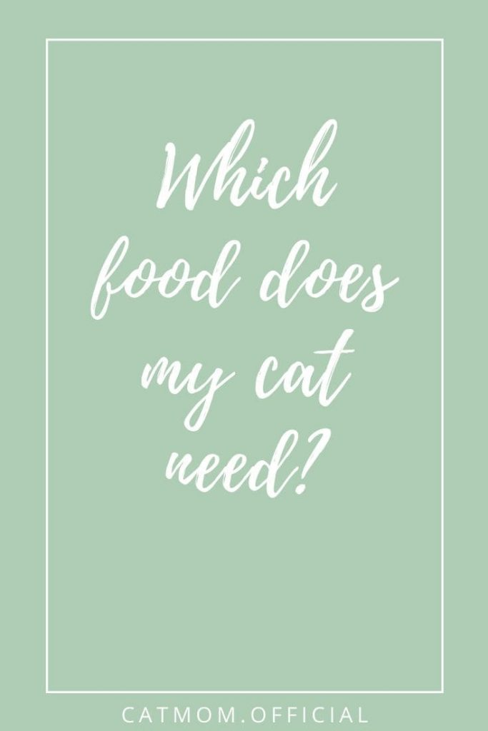 Which food does my cat need?