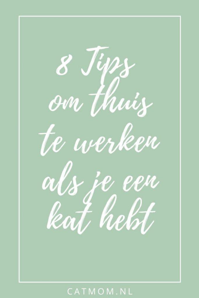 8 Tips om thuis te werken als je een kat hebt catmom.nl