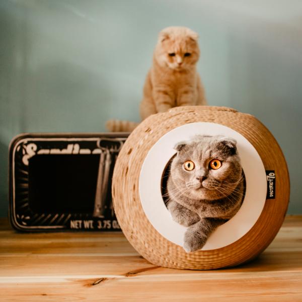 District70 ORB krabmeubel voor kat kopen krabmeubel bestellen