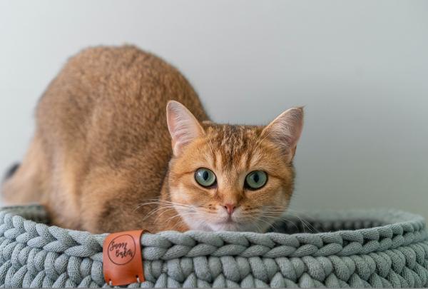 sunny baskets grijsgroene katten mand kopen mintgroene kattenmand bestellen gehaakte handgemaakte poezenmand webshop catmom.nl