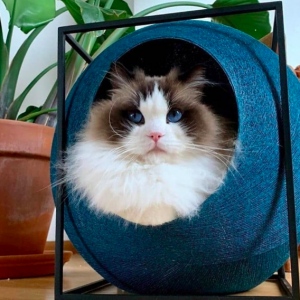 meyou paris the cubpeacock turqoise blauw groenblauwe design kattenmand bestellen uniek hip kattenmeubel kopen kattenwebshop catmom.nl