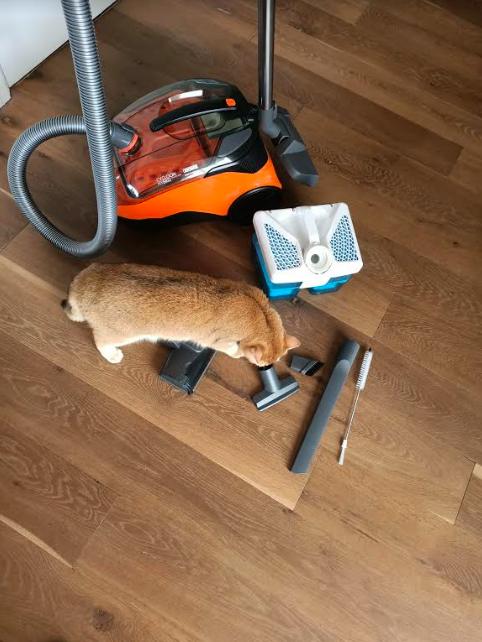 Review thomas stofzuiger hybrid family & pets de stofzuiger voor katten en honden beste stofzuiger voor huisdiereigenaren catmom.nl
